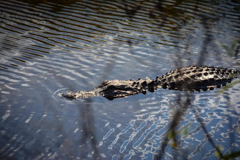 Everglades-9.jpg