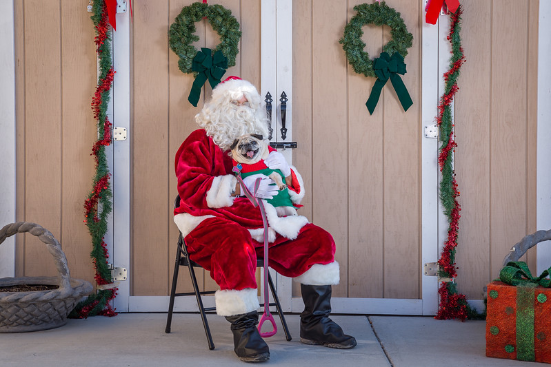 Pet Pictures With Santa-33.jpg