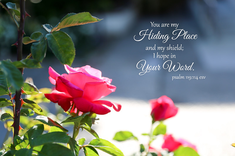 19_Psalm119-114_NJ_2018-5-7.jpg