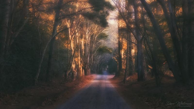 Autumn Afternoon Mist
