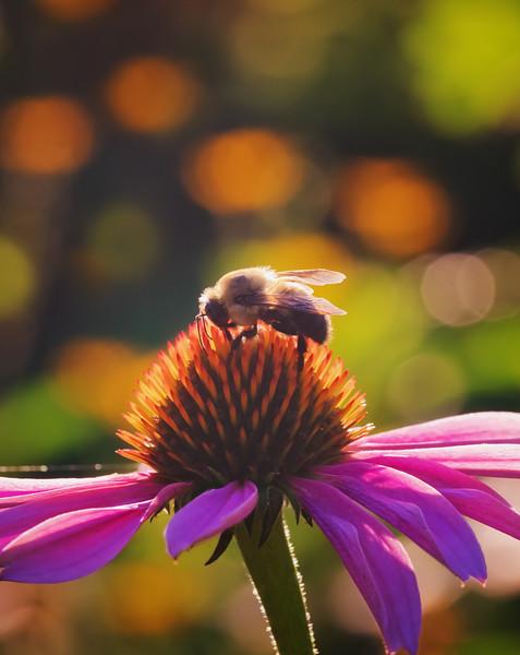 Bumble Bee Disco