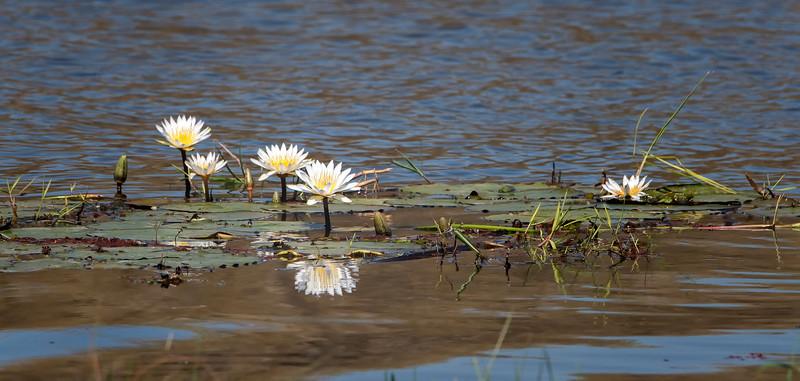 2014-08Aug-Okavango Masters-41-Edit.jpg