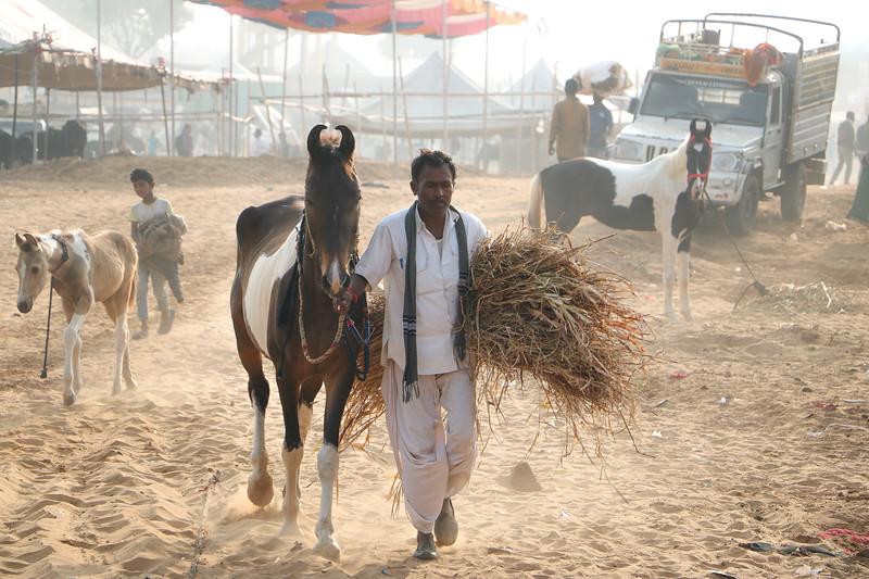 India-Pushkar-2019-7721.jpg