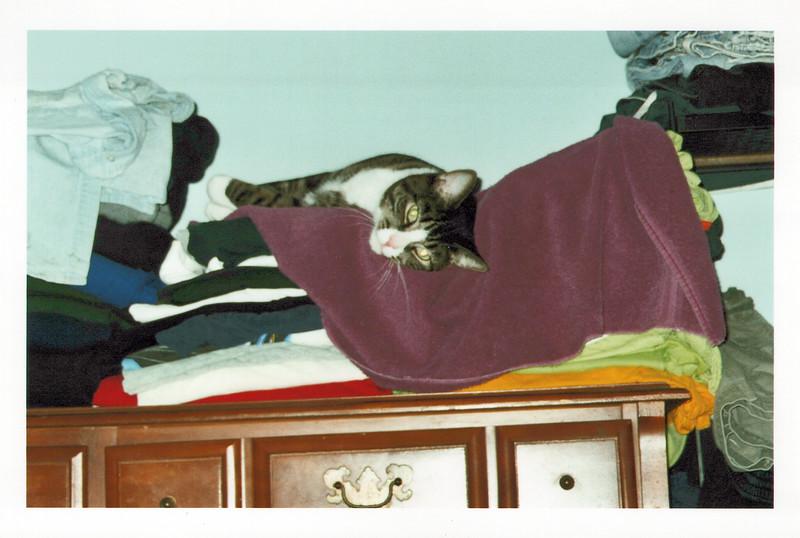2005_Cats_0001_a.jpg