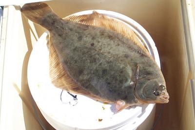 Fishing Reports 2010