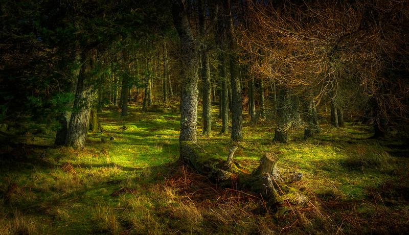 Forest Shadows-100.jpg