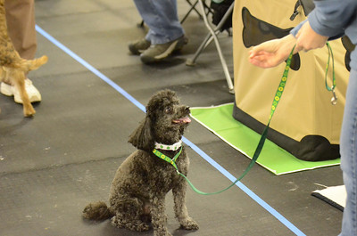 POTC AKC Novice Trial - March 9-10, 2013