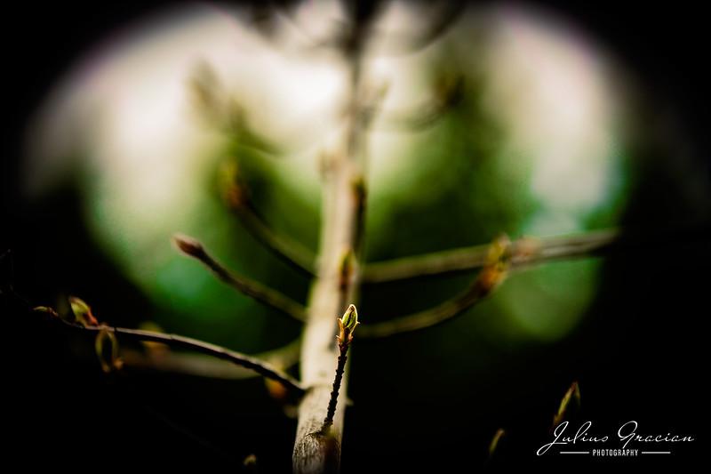 Julius-Gracian-Photography-02.jpg