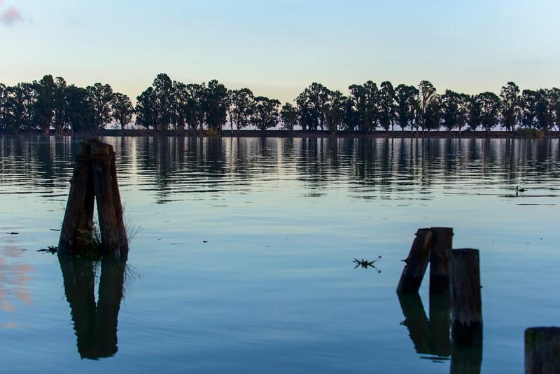 Shoreline Trees-0601.jpg