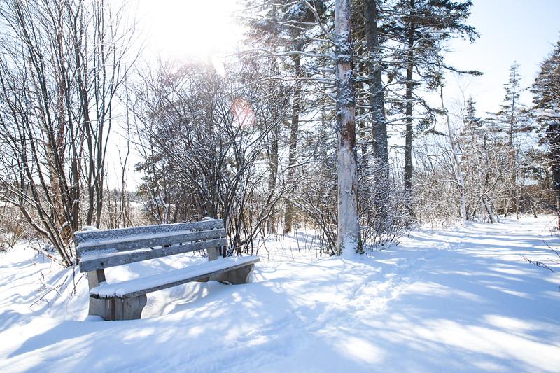 Snowshoeing15-2-046-1.jpg