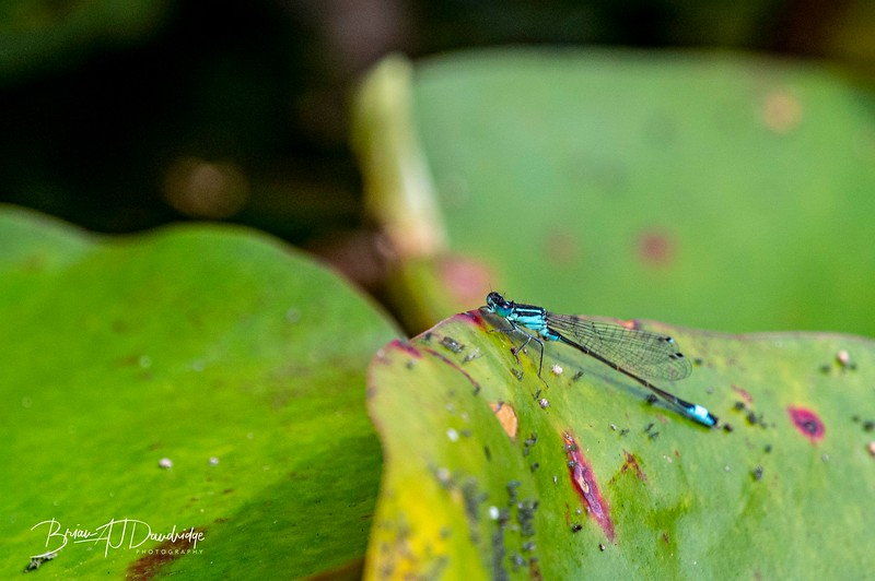 Garden_insectlife-0646.jpg