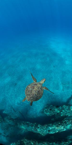 Hawaii Maui 2015-1326.jpg