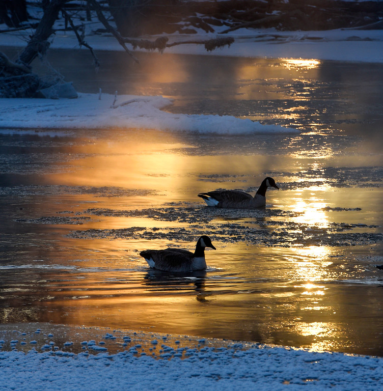 . Geese float on small patches of open water on the Sauk River near Heim\'s Mill Tuesday, Dec. 26, 2017, in St. Cloud, Minn. Minnesota experienced its most frigid Christmas Day since 1996, with wind chills as cold as 35 degrees below zero, KSTP-TV reported. The National Weather Service warned that those whose skin was exposed in such conditions could get frostbite in as little as 15 minutes. (Dave Schwarz/St. Cloud Times via AP)