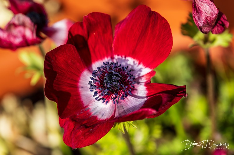 Garden flowers and insects-2499.jpg