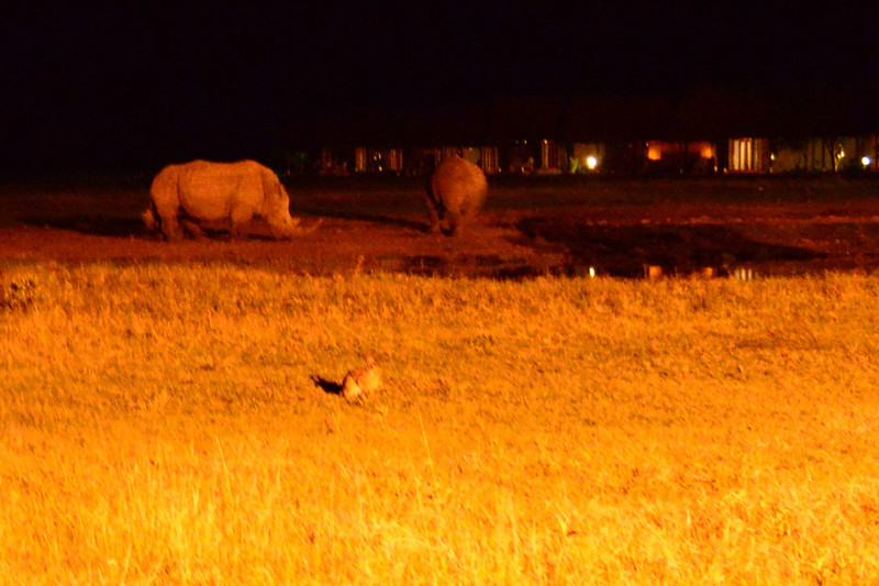 East Africa Safari 41.jpg