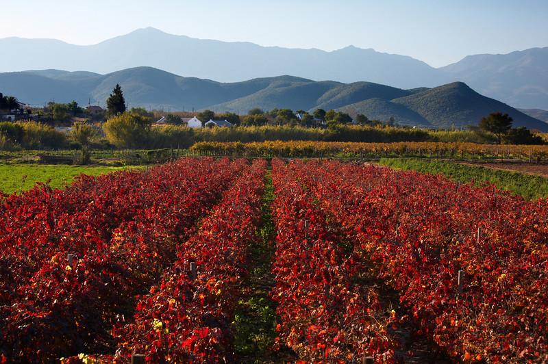 Wine Region - 4514.jpg