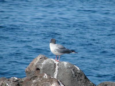 Galapagos 2016