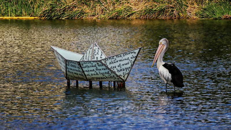 Art and the Pelican