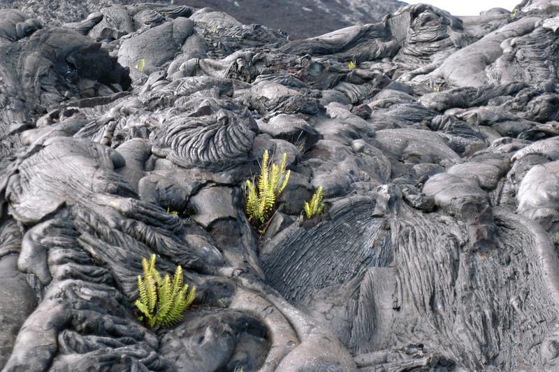 265- 20080412- Hawaii 15- Volcano Nat'l Park DSC_3133.jpg