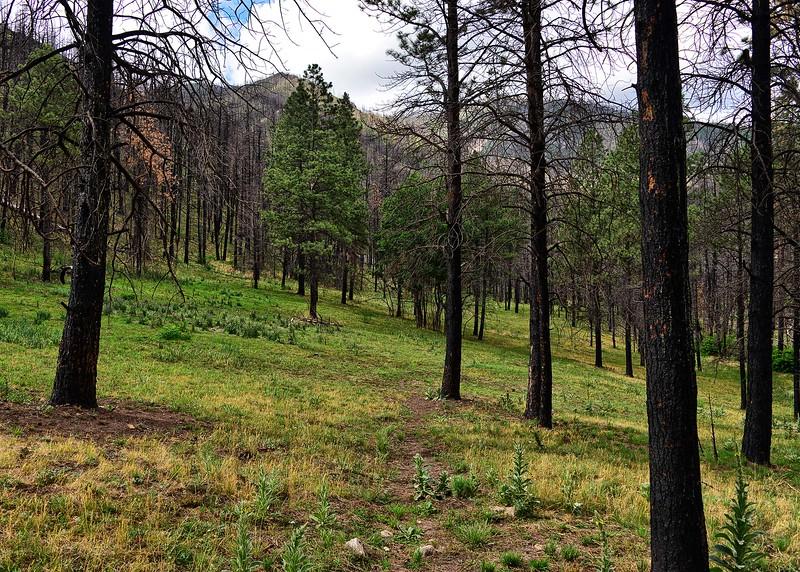 NEA_0379-7x5-Southfork Trail.jpg