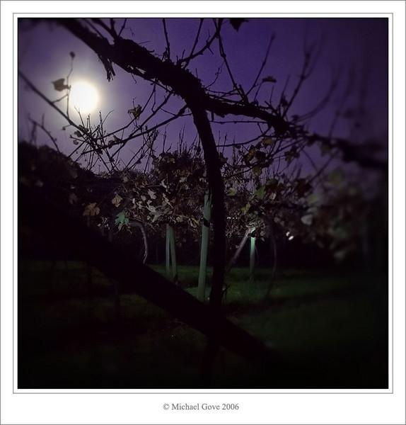 Vine yard near Aust Bristol at night (69669725).jpg