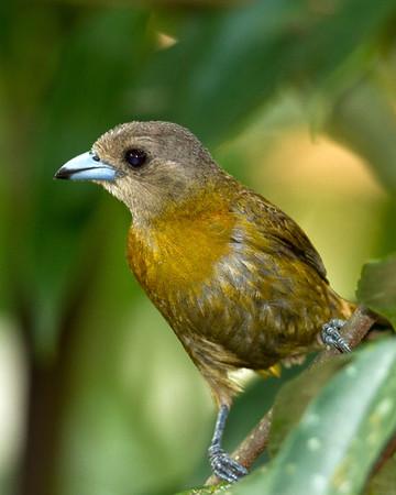 Costa Rica 2012 -- Birds & More