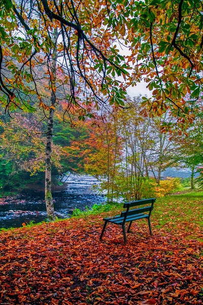 chair on river  fall-Edit.jpg