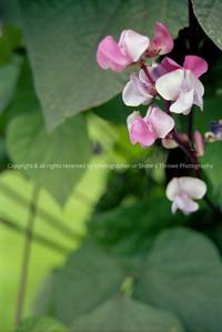 017-flower-lucas-spring04-0119