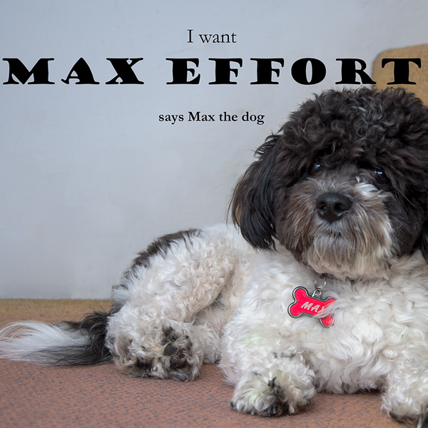 2018-Week 10 - Max the Dog.jpg