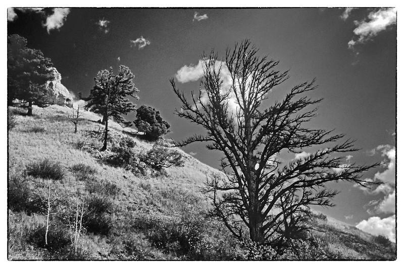 4-Mountainside-trees-for-forum.jpg