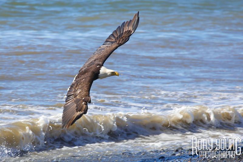Eagle-Coast.jpg
