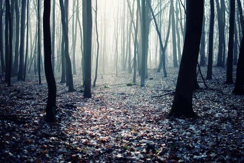 forest LRG.jpg