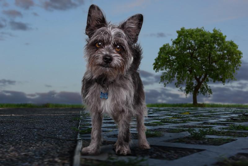 chien-eustache-1.jpg