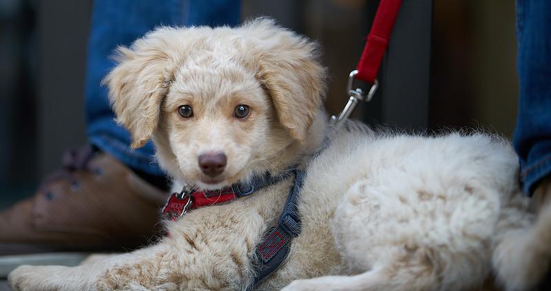 puppymar1317 5.jpg