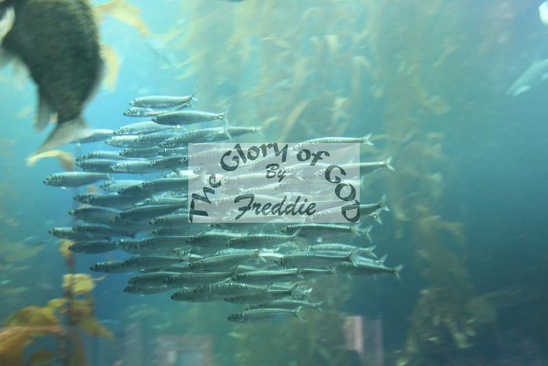 Aquarium 20003.jpg