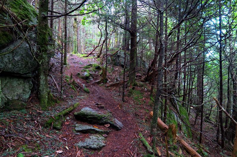 Mountains-to-Sea Trail - 5,950'