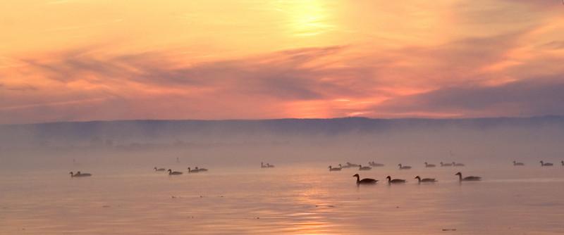 Bird_at_sunrise.jpg