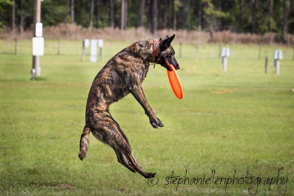 _MG_2668Up_dog_International_2016_StephaniellenPhotography.jpg
