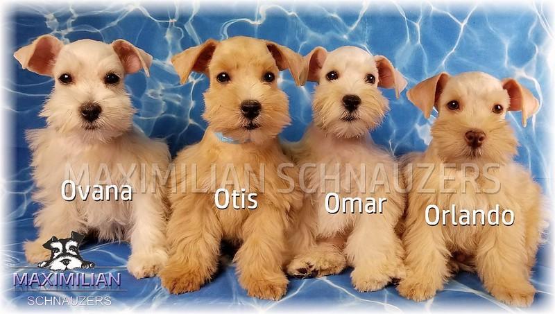Xia Pups 021.5.jpg