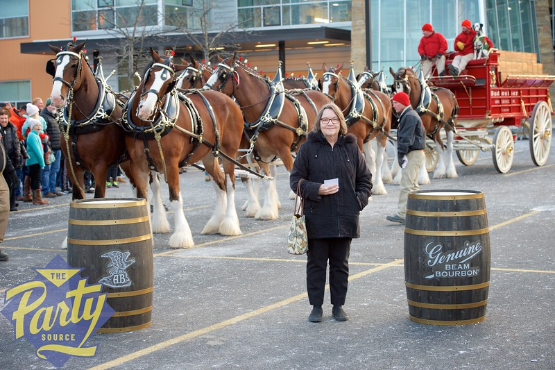 Clydesdale Portraits 294.jpg