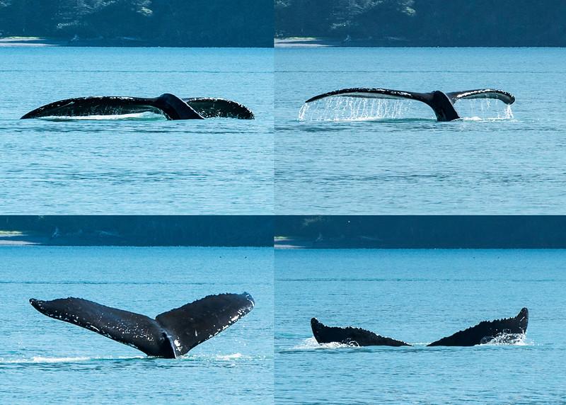 20151023-whale tail mix.jpg