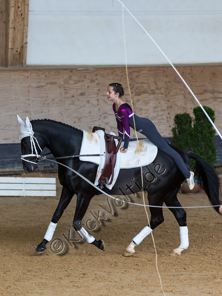 Pferd_Inter_2019_0470_klickvolti.jpg