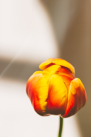 Table Flower-Web
