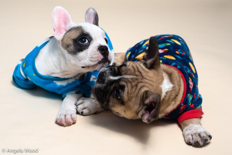 Puppies47.jpg
