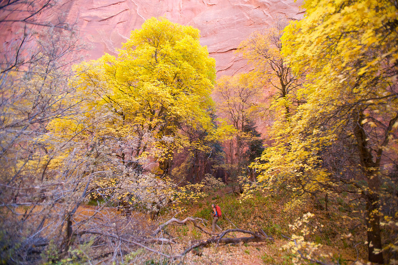 walking into Kolob Canyons Taylor Creek