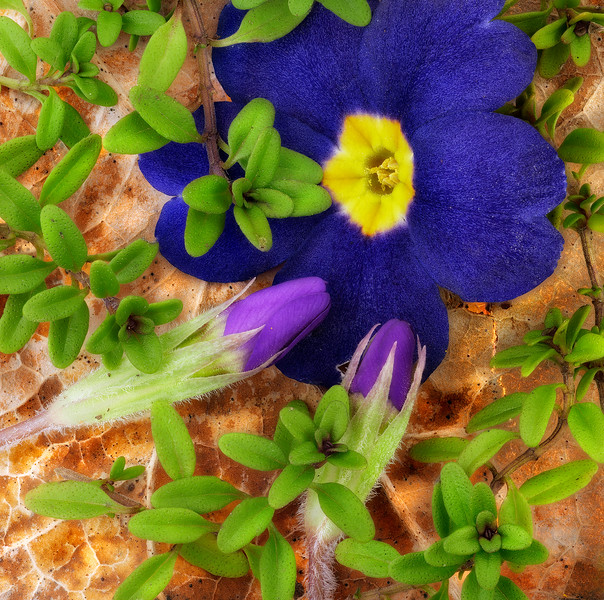 Primrose and Thyme