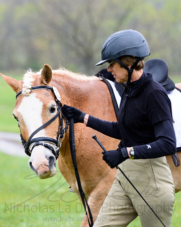 Dressage at Spring Field Farms