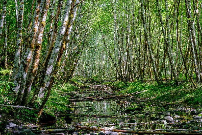 Hoh River Trail - DSCF4424.jpg