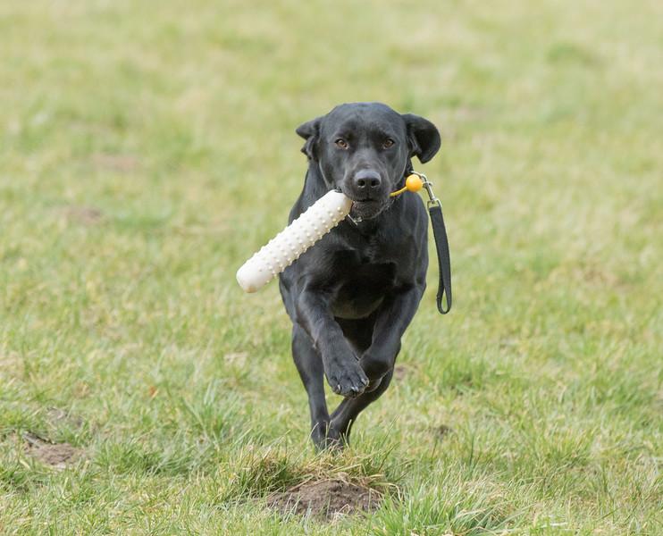Dogs-4983.jpg