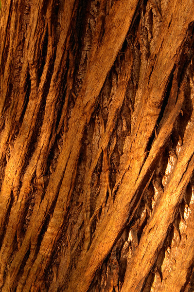 132 Ashridge - Tree Bark Pattern - 9273.jpg